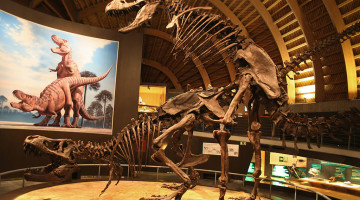 1024px-MUJA-Tyrannosaurus