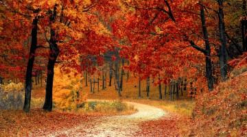 fall-autumn-red-season-large